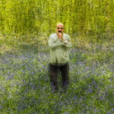 Martin amongst the bluebells